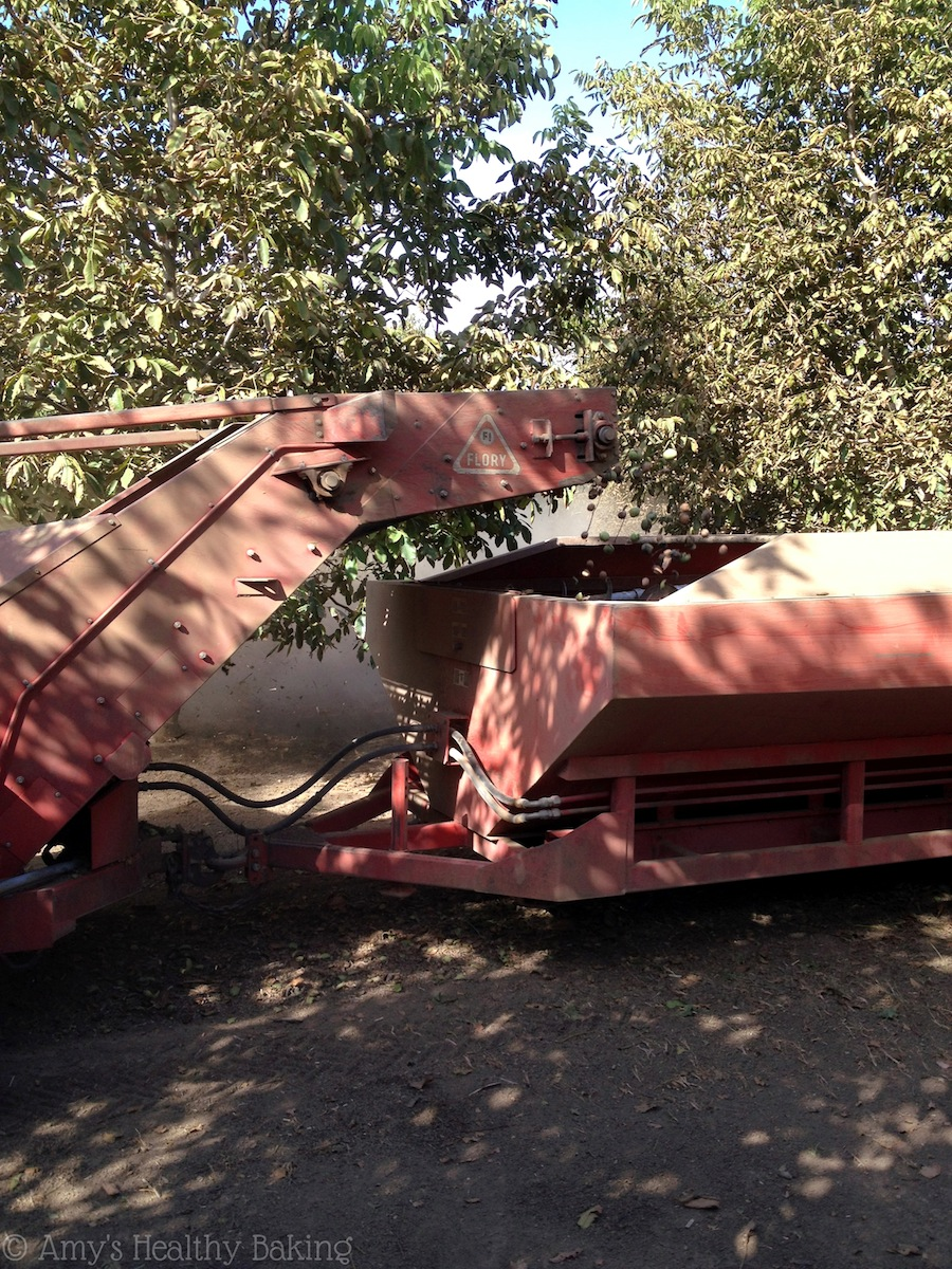 Diamond of California, Walnut Harvest Tour 2014. Gorgeous orchards & amazing food - what more could you want??