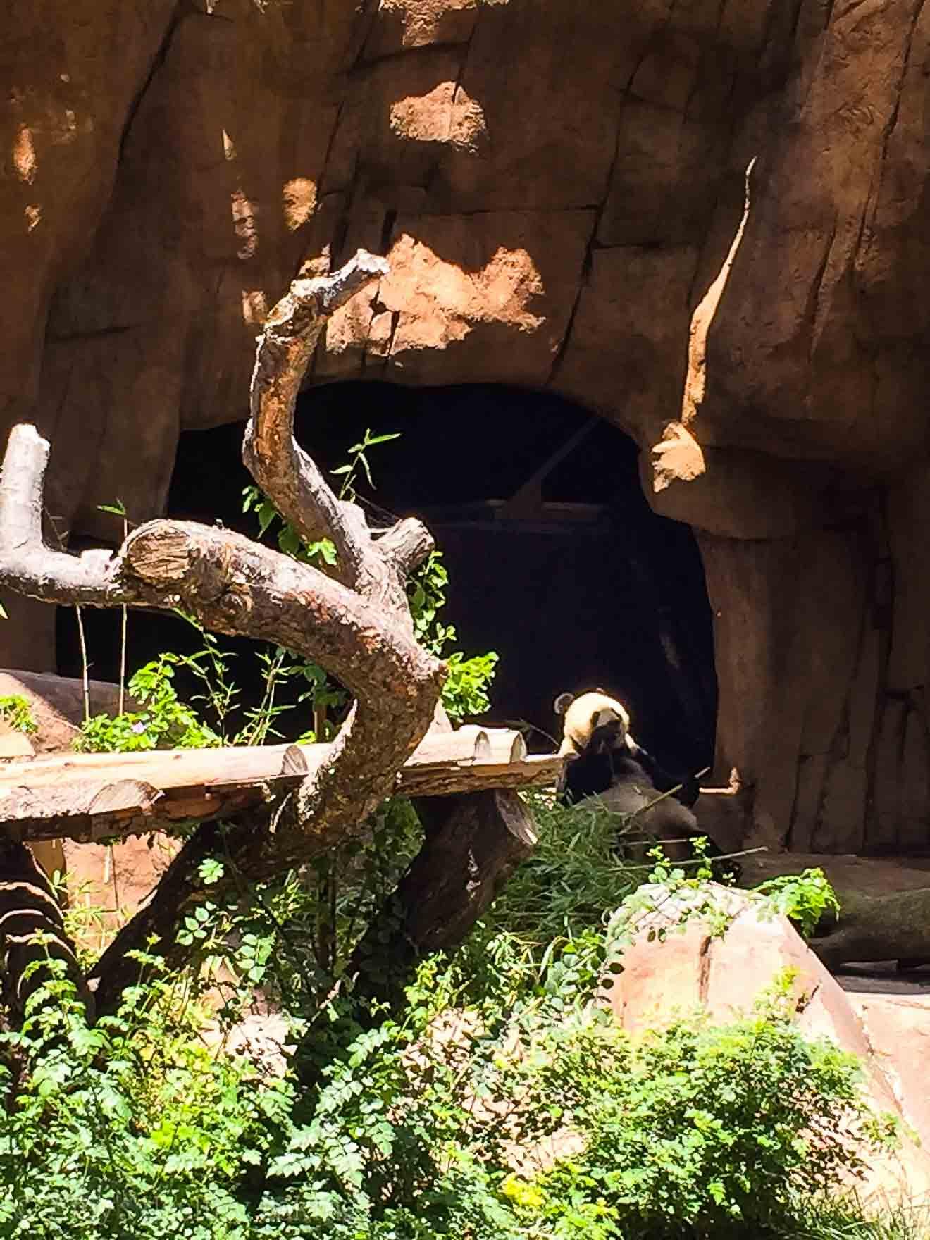 Exploring San Diego! @amybakeshealthy | The AMAZING Zoo!