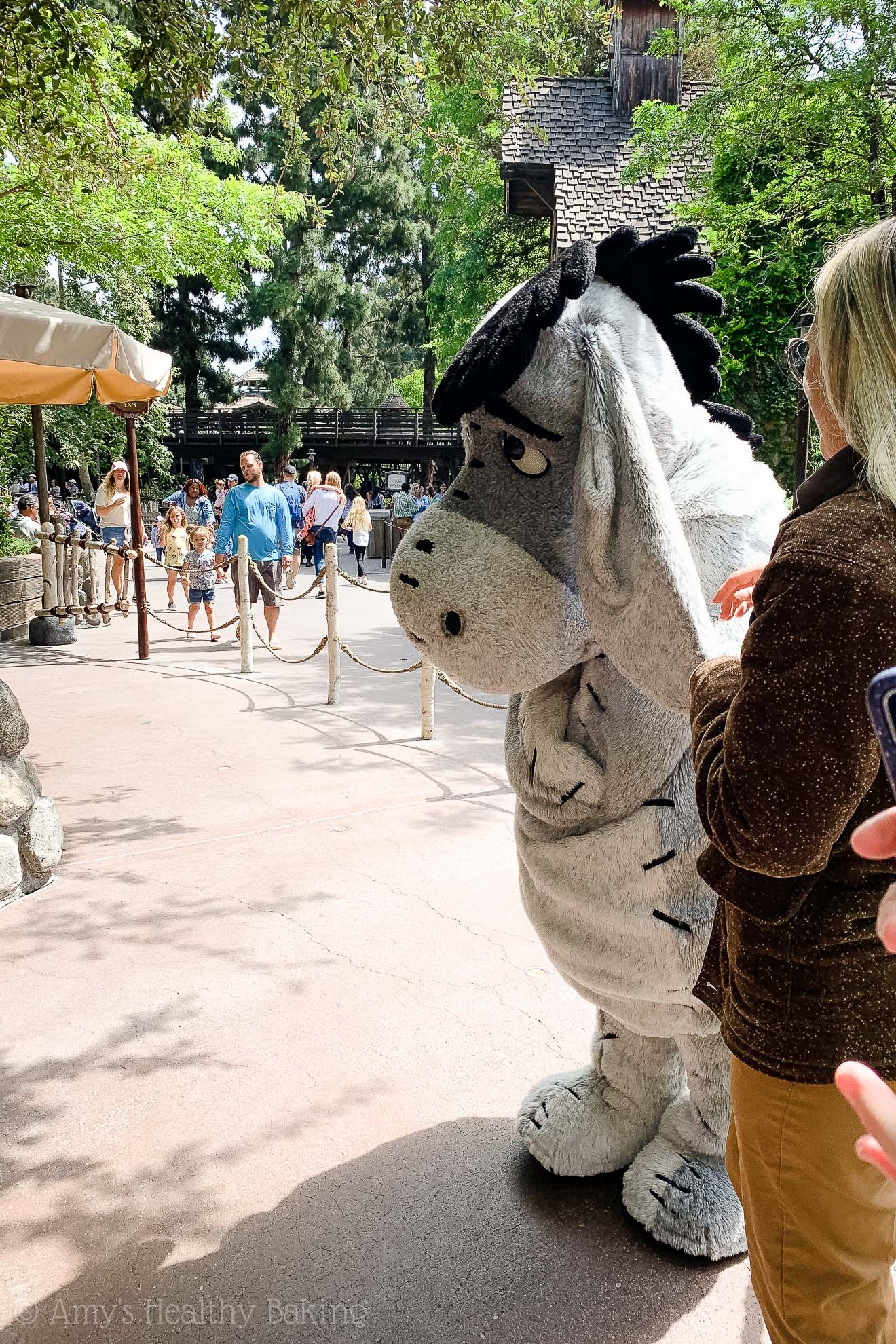 Meeting Eeyore in Pooh's Corner in Disneyland - Anaheim, California