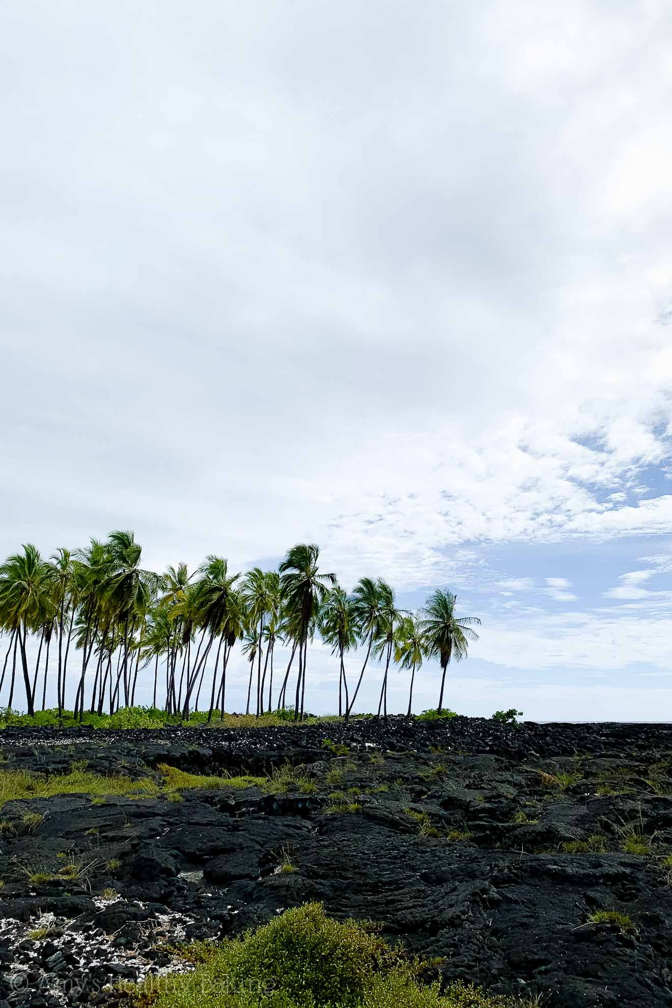 View of lava rock and palm trees at the Place of Refuge on the Big Island of Hawaii